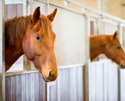Financien administratie paarden bedrijf