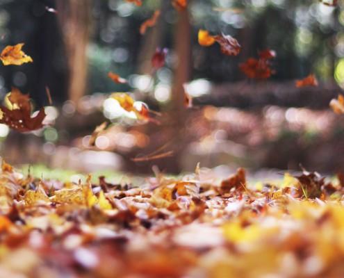 herfst chaos opruimen stal