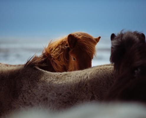My Equine business meer omzet paardenbedrijf