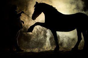 Dominique van Dreumel Equigeniek Paardenfotografie
