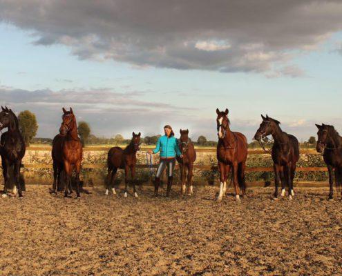 Malene en Paarden